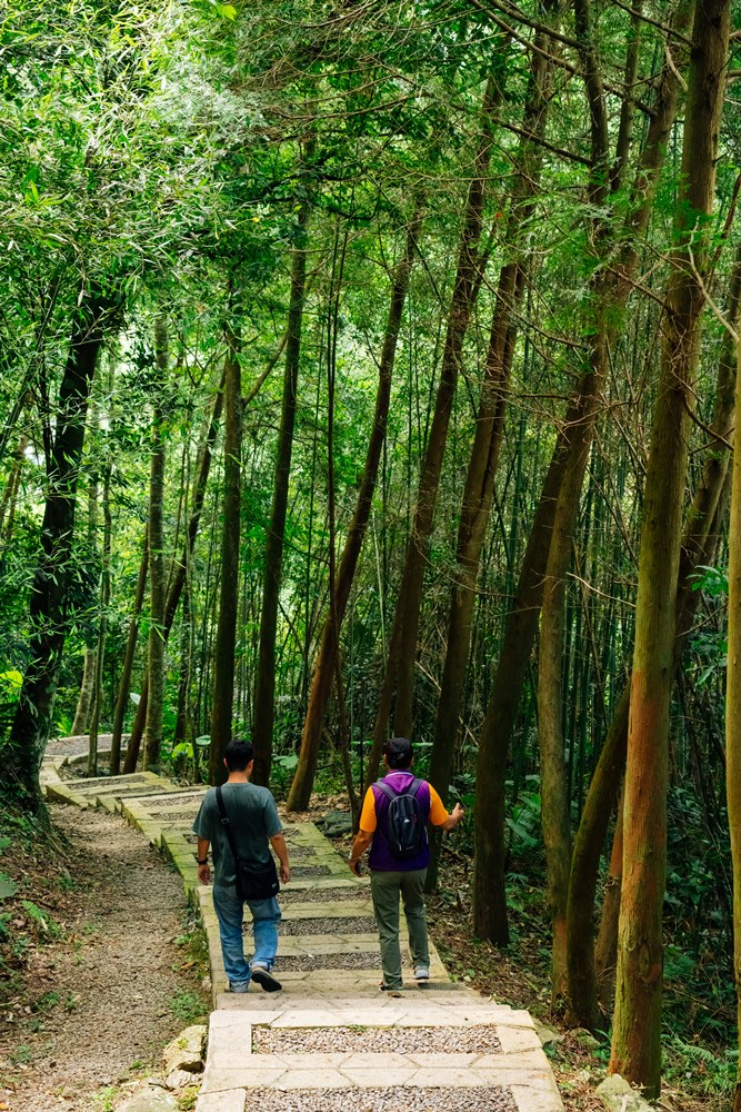 古道兩旁盡是茂密的桂竹林