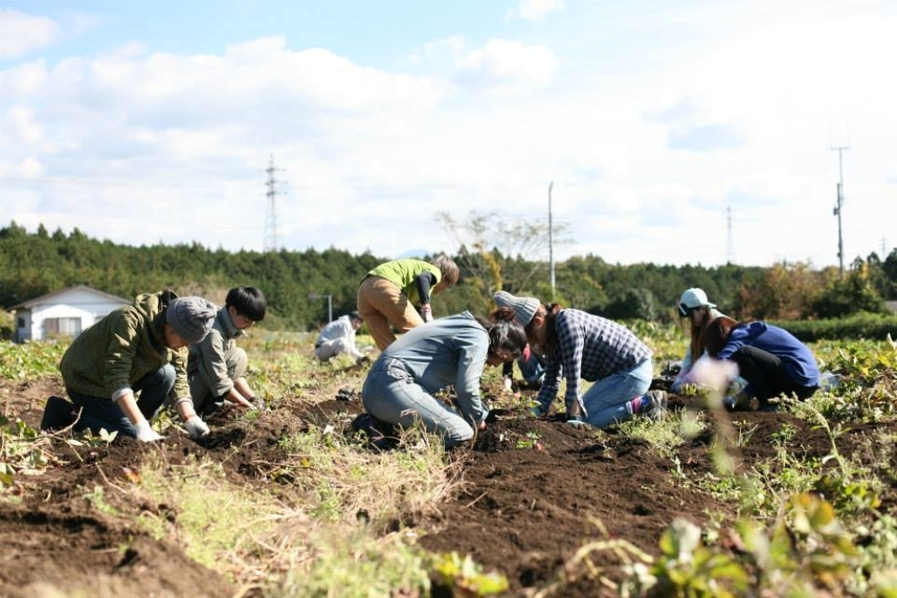 日本/富士山/農作體驗/在地永續/D&DEPARTMENT SHIZUOKA