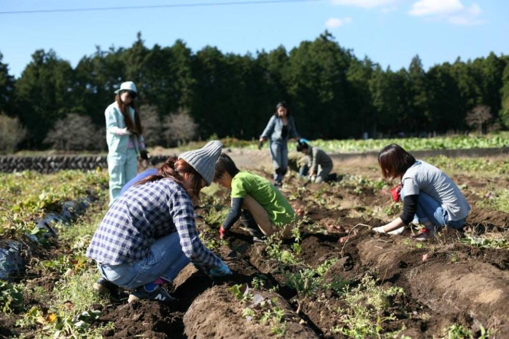 日本/富士山/農作體驗/D&DEPARTMENT SHIZUOKA