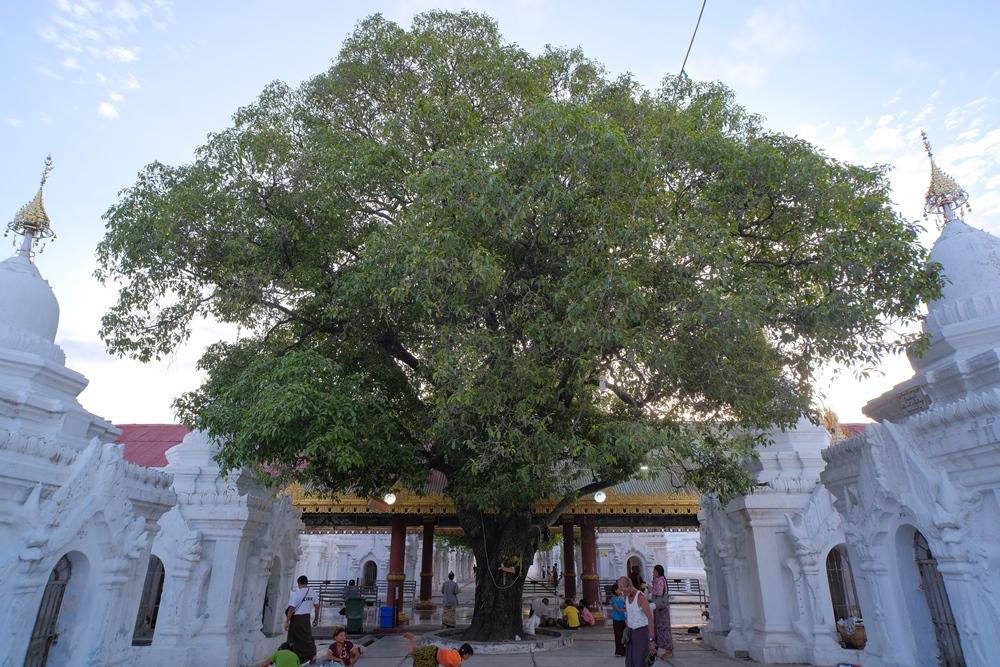 固都陶佛塔/Kuthodaw Pagoda/曼德勒山/曼德勒/緬甸
