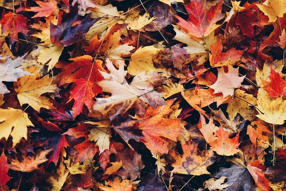 楓葉/秋天/街景/華盛頓特區/華盛頓/美國