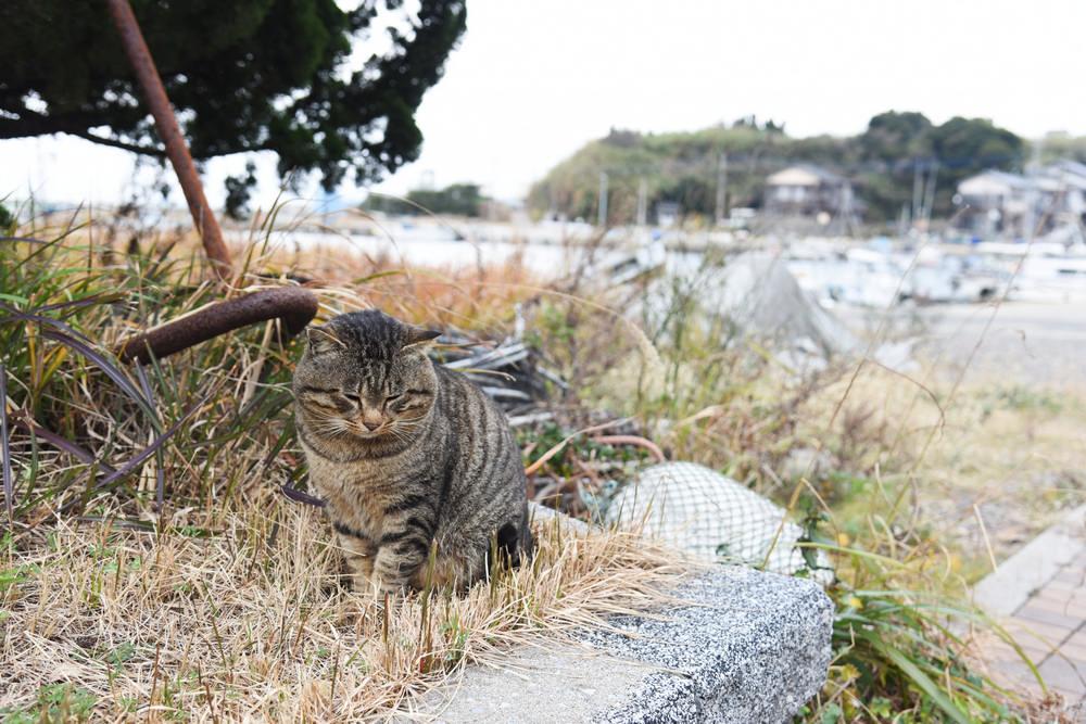 貓島/藍島/小倉/北九州/福岡/日本