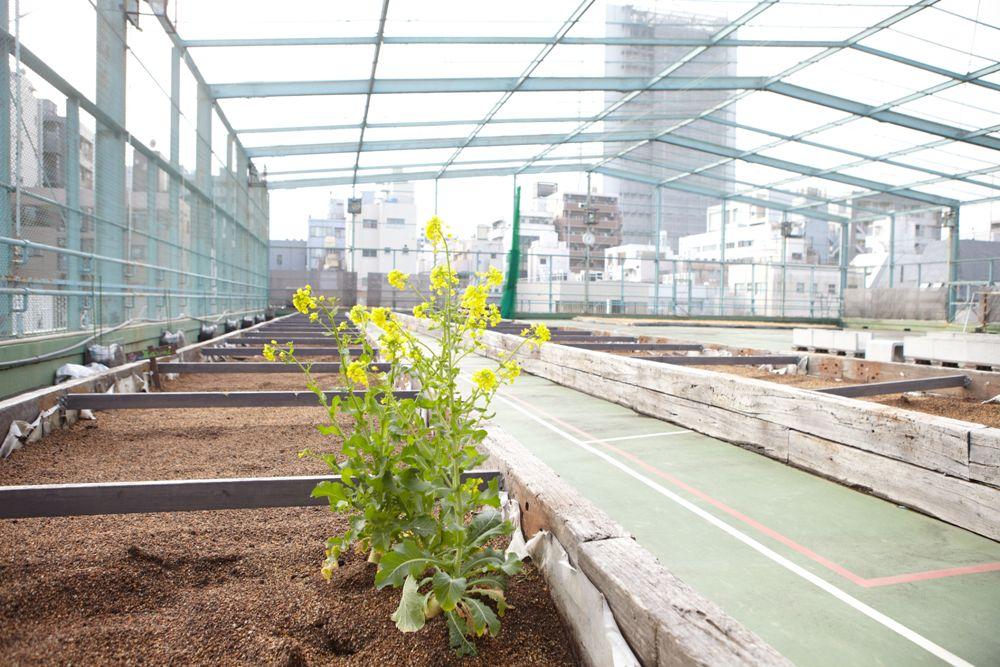都市農園/頂樓籃球場/3331 Arts Chiyoda/東京/日本